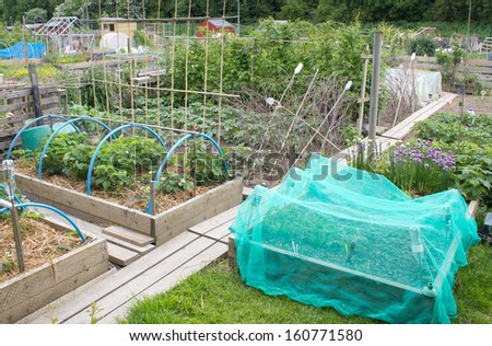 Allotment garden with raised beds - stock photo