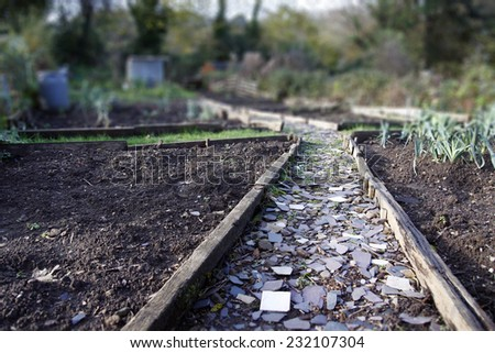 Allotment path made from broken slate in Autumn - stock photo