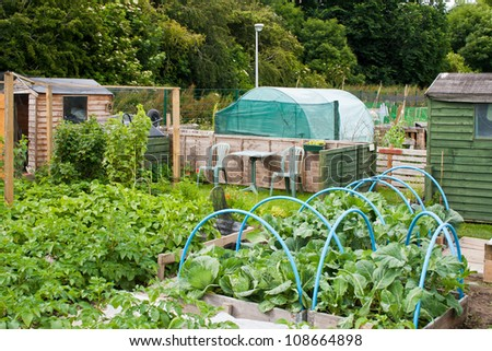 Allotment plots growing a variety of vegetables - stock photo
