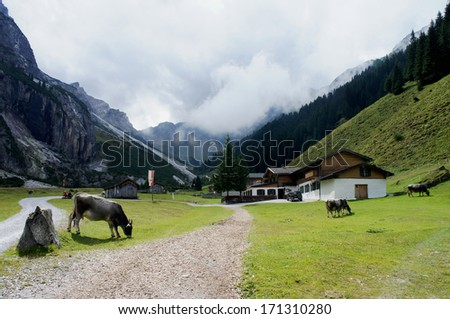 Alm in the Pinnestal in Tyrol; steep mountains, a house and grazing cows; overcast sky/Alm in the Stubai Mountains  - stock photo