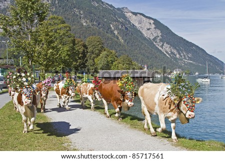 Alm output of the cows - stock photo