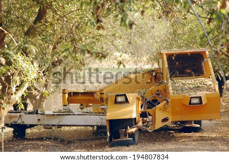 Almond at the harvest time. California, USA  - stock photo