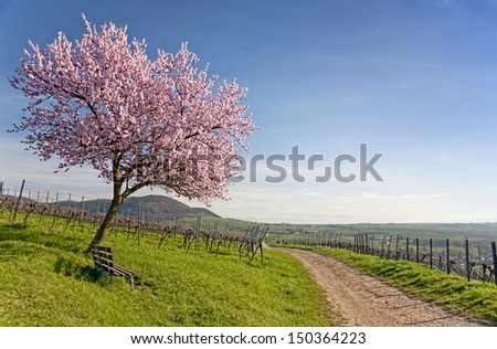 Almond Blossom, south germany