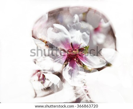 Almond flowers in skull, double exposure - stock photo