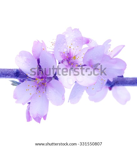 almond flowers isolated effect vintage