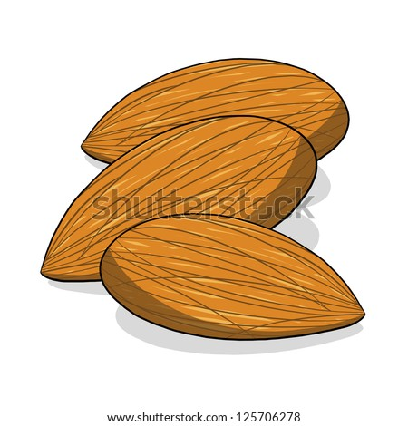 Almond nuts illustration; Isolated almonds; Tree nuts