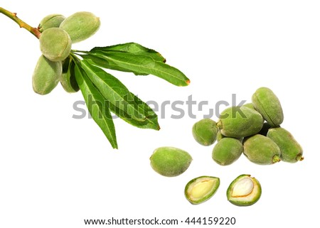 Almonds fruits. Fruits and leaves on a branch. Fresh almonds one-piece and open. Growing and harvest. Isolated on a white background