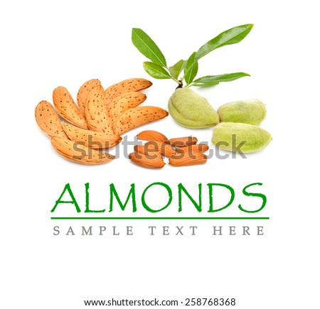 Almonds isolated on the white background. Kernel - stock photo