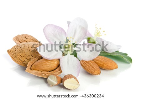 Almonds with leaves and flowers close up on the white background - stock photo