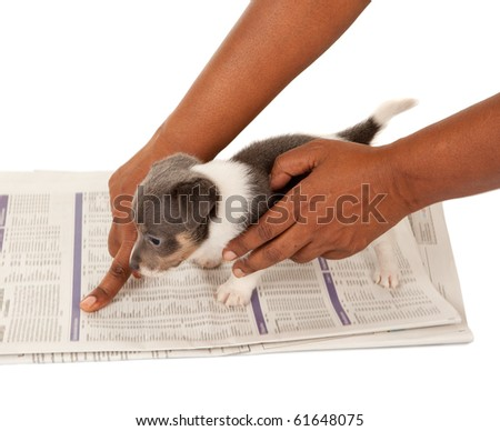 Almost house-broken jack russel puppy being taught to go on a newspaper (blurred text) - stock photo