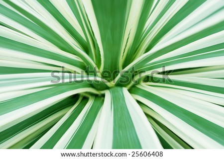 aloe closeup - stock photo