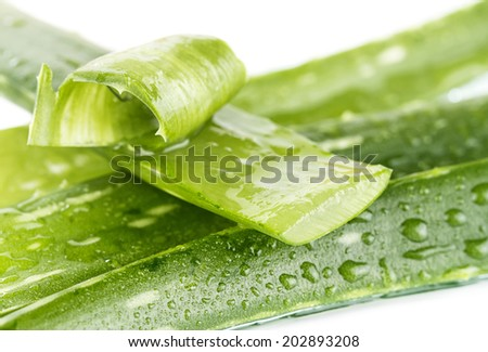 aloe vera  - stock photo