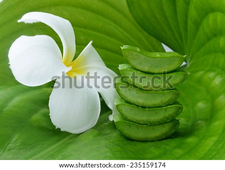 Aloe vera and frangipani flower - stock photo