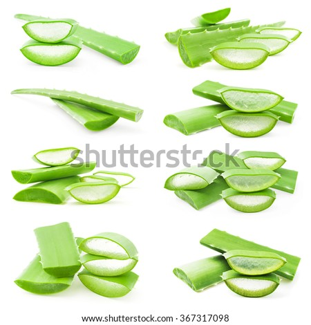 aloe vera fresh leaf - stock photo