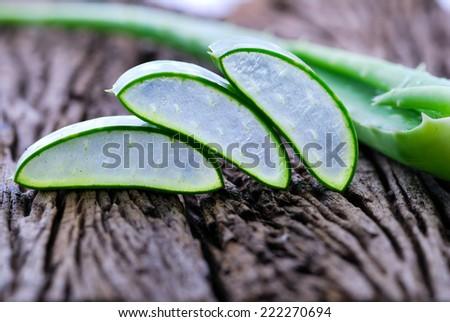 Aloe vera fresh leaf plant . - stock photo