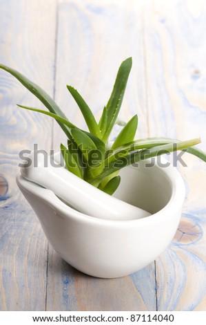 Aloe vera - herbal medicine - stock photo