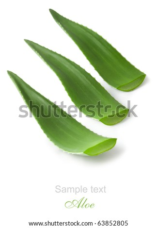 aloe vera isolated on white - stock photo