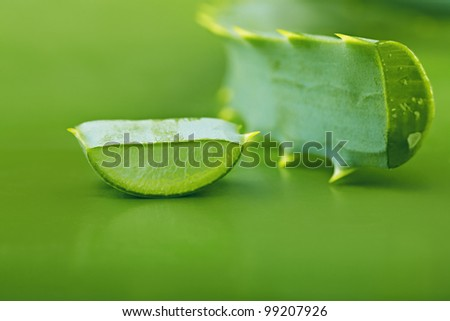 Aloe vera leaves on a green background