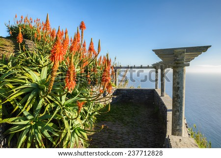 Aloe Vera plant and lookout over the coast of Madeira (Portugal) - stock photo