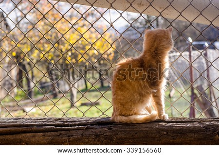 Alone cat watching outside of the window and see wonderful autumn garden - stock photo