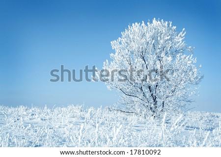 Alone frozen tree blue toned. white winter - stock photo