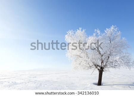Alone frozen tree in winter snowy field. Frosty winter day - snowy branch. - stock photo