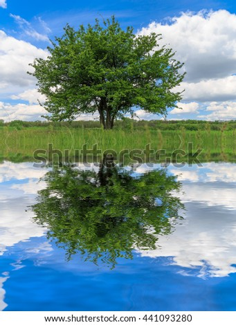 alone green tree with water reflection in nice spring day