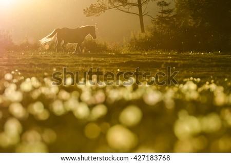 Alone horse on farm meadow in beautiful last sunset light. Beautiful wallpaper full of freedom - stock photo