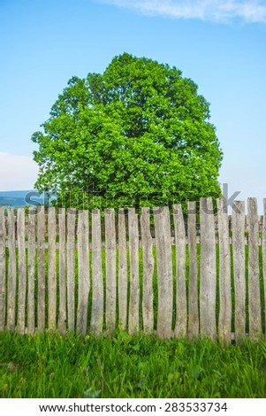 Alone old big oak tree and retro vintage aged wooden fence with fresh spring grass in meadow Empty space for inscription or people Nature summer background  - stock photo