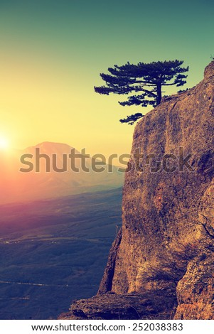 Alone pine tree on the edge of rock at sunrise time. Mountain landscape