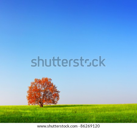 Alone red autumn tree on a green meadow with blue clear sky - stock photo