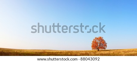 Alone red autumn tree on a meadow with a lot of copyspace - stock photo