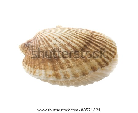 Alone scallop on the white background