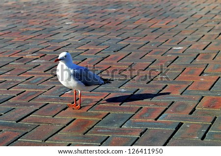 Alone seagull in Darling Harbour, Sydney - stock photo