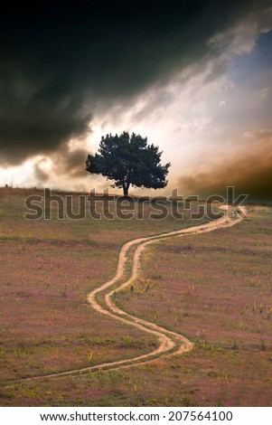 alone tree against dramatic HDR sunset and dirt road, vertical nature landscape  - stock photo