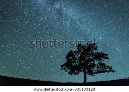 alone tree and milky way - stock photo