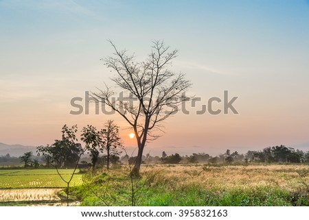Alone tree at sunset or sunrise, dead tree in country field, tree and sunset background