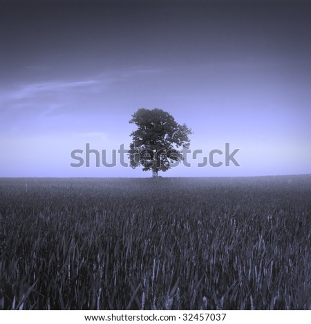 Alone tree in a field in blue color - stock photo