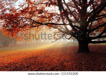 Alone tree in Autumn park. - stock photo