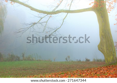 Alone tree in autumn park, water pond in the background. Misty foggy autumnal day - stock photo