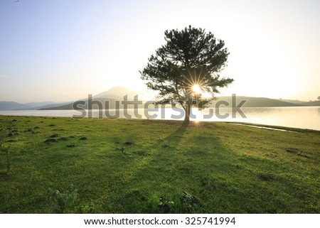 Alone tree in grass field - stock photo