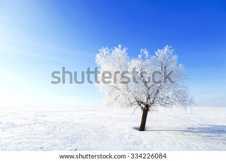 Alone Tree in the snow in a field in winter. Beautiful white winter. Blue sky. - stock photo