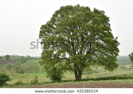 Alone tree on green meadow - stock photo