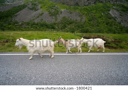 Along came a goat - stock photo