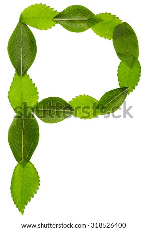 Alphabet from green leaves. Letter P - stock photo