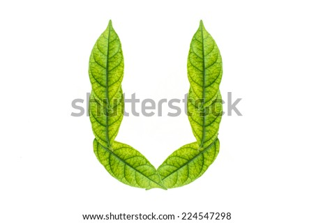 Alphabet from the green leaves. isolated on white. - stock photo