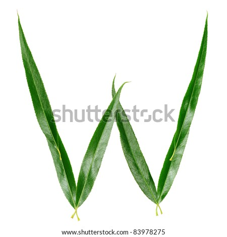 "Alphabet from the leaves of willow. Letter ""W"""