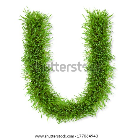 "Alphabet grass ""U"" letter, isolated on white background - stock photo"