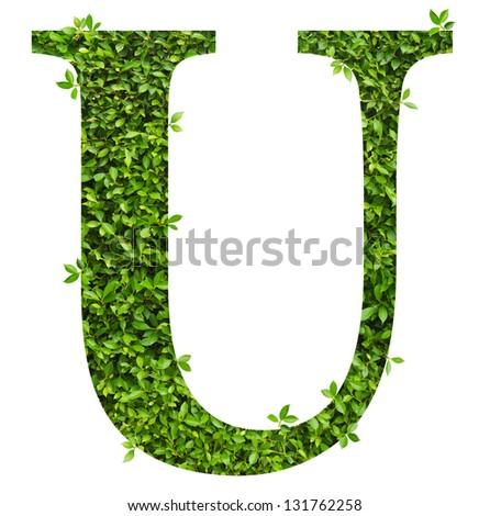 alphabet leaf design - stock photo