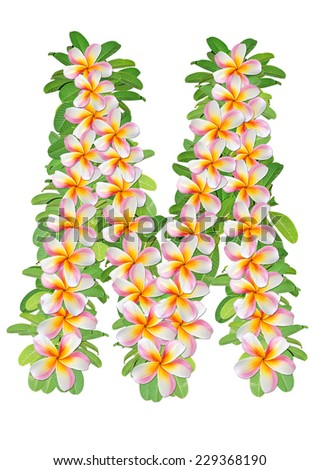 alphabet M created from Frangipani flower and green leafs  - stock photo